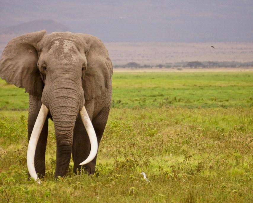 elephant-3903657_1920.jpg