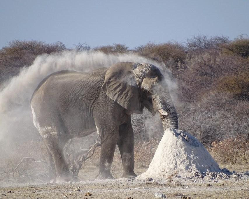 elephant-4407253_1920.jpg