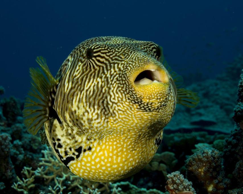 fish-1118874_1920.jpg