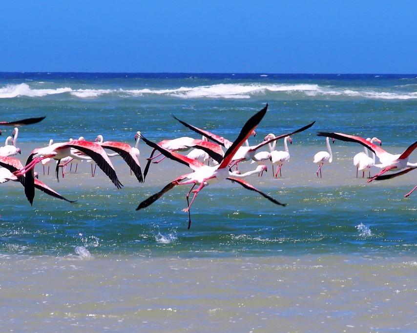 flamingos-3528205_1920.jpg