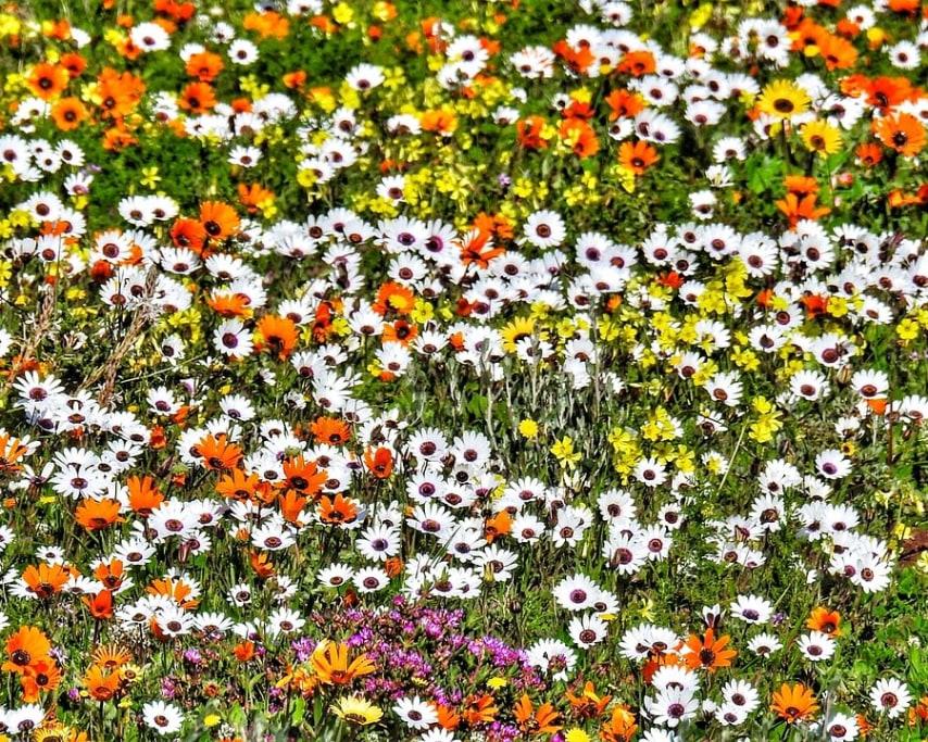 flowers-2818647_1280.jpg