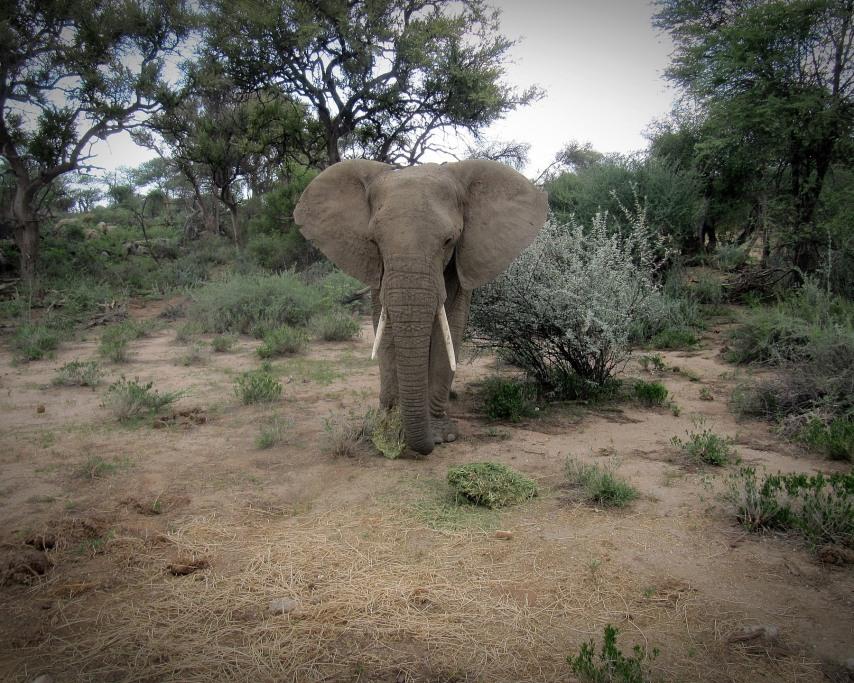 namibia-1150087_1920.jpg