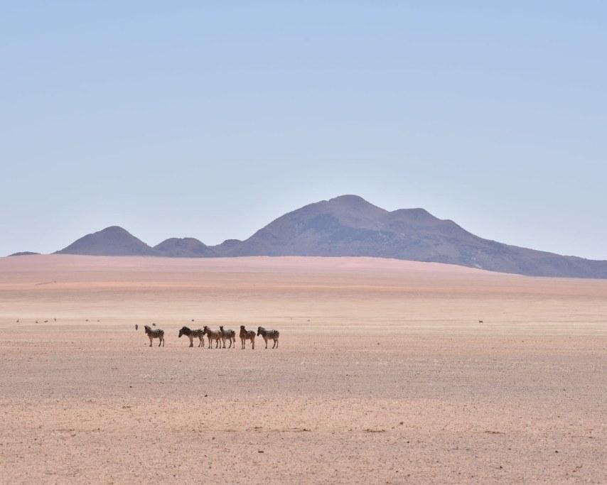 namibia-4111860_1920.jpg