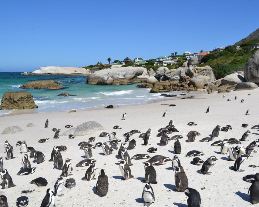 penguins-1085059_1920.jpg