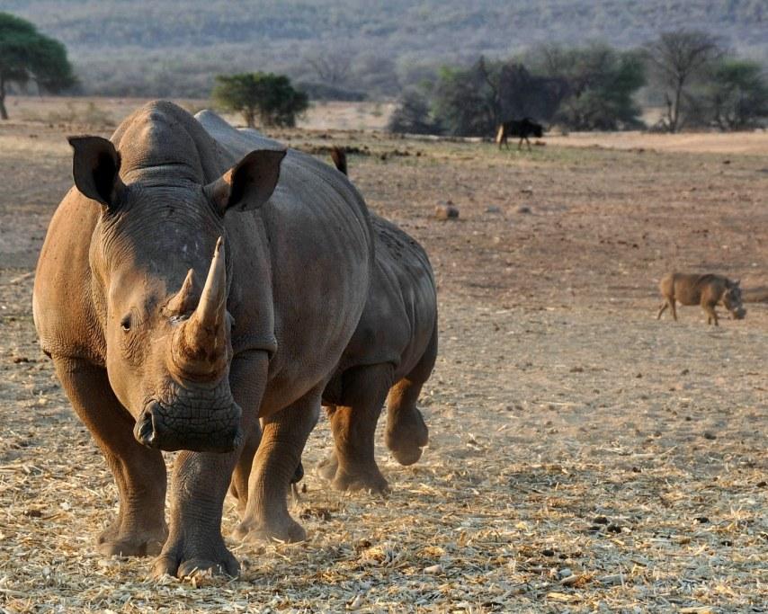 rhino-1170132_1920.jpg