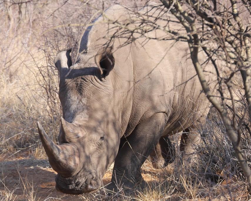 rhino-226084_1920.jpg