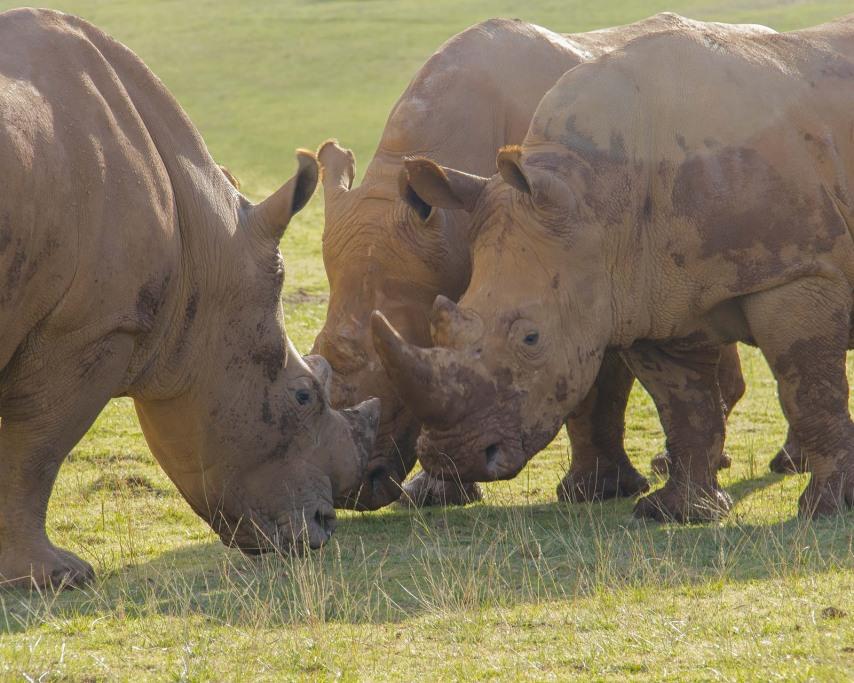 rhino-3729323_1920.jpg