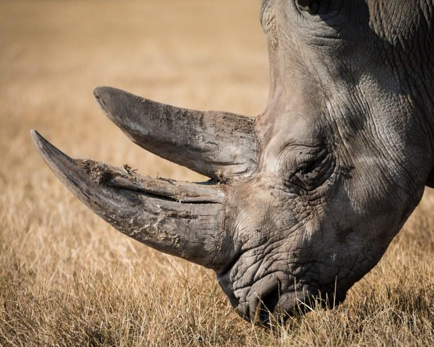 rhinoceros-768714_1920.jpg