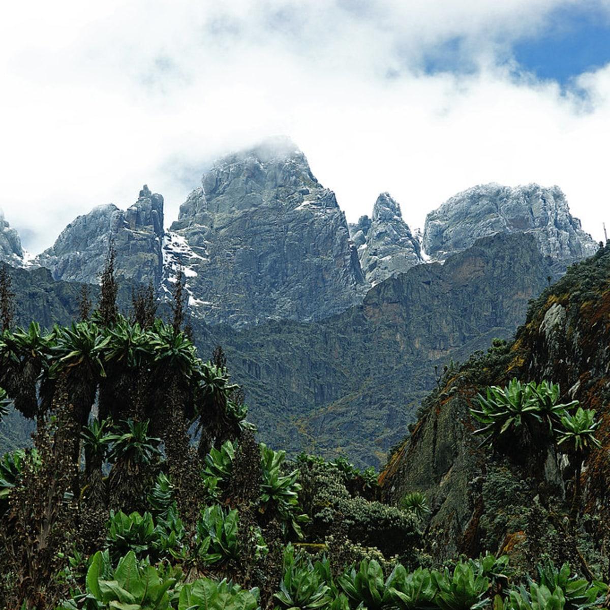 Ruwenzori-Besteigung und Trekking im Bwindi Bergregenwald für Sergej & Partnerin
