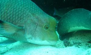 Fisch-Meeresboden-Galapagos.jpg
