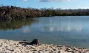 Bachas Strand Galapagos Ecuador