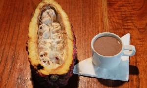 Kakao-Mindo.JPG