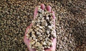 Kaffe-La-Victoria