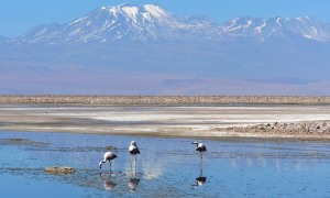 Lagunas-Altiplanicas-chile.JPG