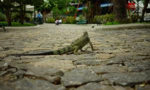 Leguanpark-Guayaquil.JPG
