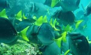 tropische-fische-galapagos.jpg
