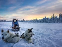 Aurora Borealis Workshop und Hundeschlittenfahrt