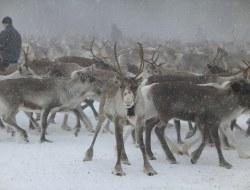 Schneemobil, alternativ Sami Kultur