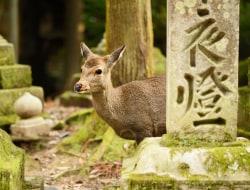 Hakone - Kyoto - Nara - Kyoto (M)