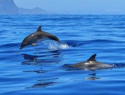 Wal-/ Delfinbeobachtung
