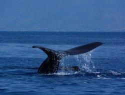 Giganten der Meere Reiseverlauf