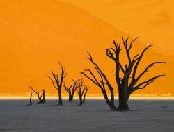 Von der Kalahari zur Sossusvlei
