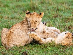 Wir erleben die Masai Mara