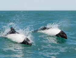 Reiseverlauf Orca Safari Península Valdés