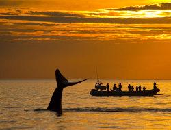 Die Wale der Penénsula Valdés