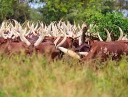 Aktivitäten im Lake Mburo National Park