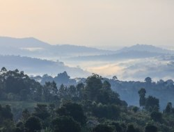 Bwindi - Fahrt nach Ishasha
