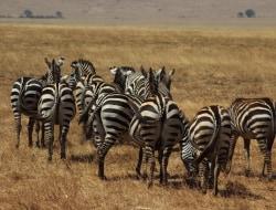 Lake Mburo National Park, Pirschfahrt, Walking Safari