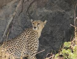 Ngorongoro Krater, Pirschfahrt