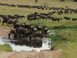 Serengeti National Park - Ngorongoro