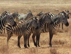 Lake Mburo National Park - Walking Safari - Bwindi Impenetrable National Park