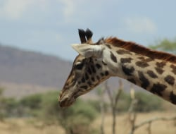 Queen Elizabeth National Park - Lake Mburo National Park