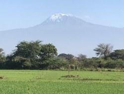 Ngorongoro - Mto wa Mbu - Kilimanjaro