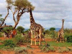 Kidepo National Park - Murchison Falls National Park