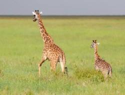 Vom Lake Manyara in die Serengeti