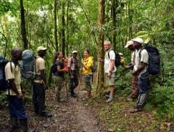 Wanderung durch den Bwindi Nationalpark