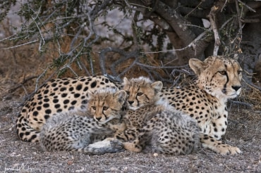 8 Tage Wildlife Fotografie in Südafrika und Botswana