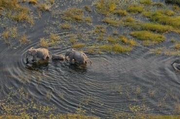 12 Tage Gruppenreise mit 11 Teilnehmern rund um das Okavango Delta