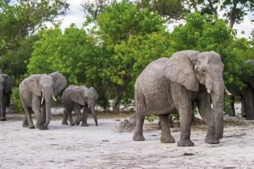 7 Tage Komfort Camping Gruppenreise mit 9 Teilnehmern durch das Okavango Delta