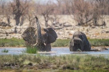 21 Tage Namibia Mietwagenreise mit Lodge und Campingübernachtungen