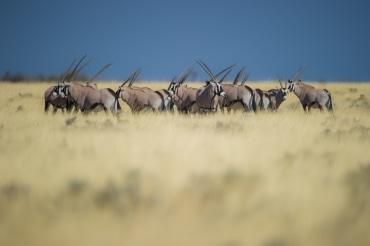17 Tage Mietwagenreise durch Namibia