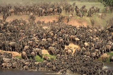 7 Tage große Kenia Komfort Safari