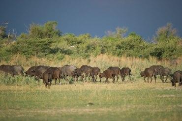 10 Tage Camping - Lodge Mietwagenreise in die schönsten Nationalparks Botswanas