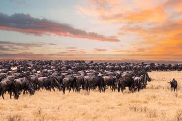12 Tage Kleingruppen Safarireise durch Kenia und Tansania (Copy)