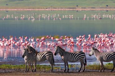 7 Tage Luxus Kleingruppensafari in Tansania