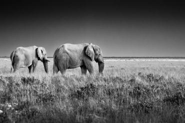 16 Tage Mietwagenreise Namibia und Botswana Lodge - Camping